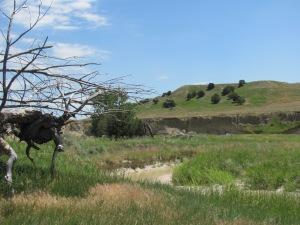 Sage Creek and green hills